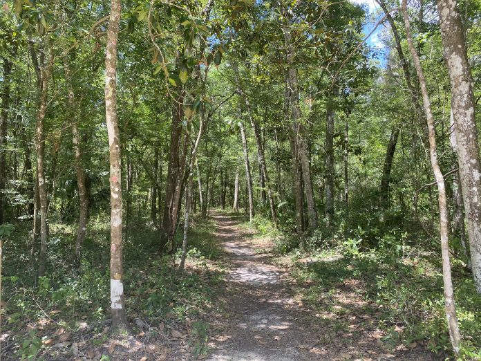 Fickett Hammock hiking trail